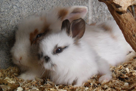pet-farm-animals-12